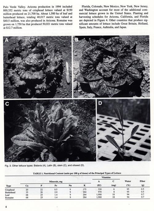 history_of_lettuce-5